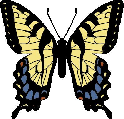 PapilioGlaucusNonmimetic.png