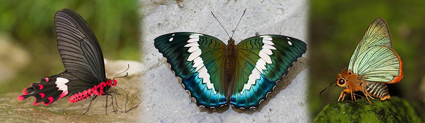 Slider_TropicalButterflies1.png